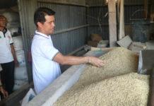 Gabah Petani Baru di Klungkung Terserap Enam Persen di KUD