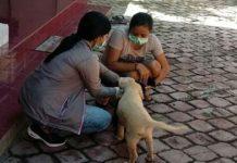 Ini Jumlah Anjing Liar yang Divaksin di Denpasar