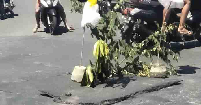 Berlubang, Jalan Aseman, Tibubeneng Ditanami Pohon
