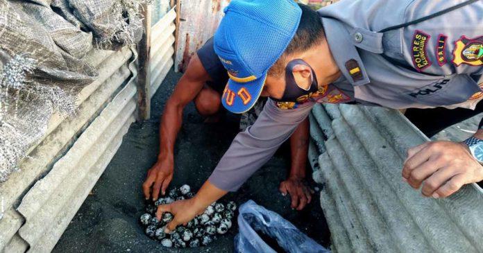 Polisi Amankan Ratusan Telur Penyu di Pelabuhan Tribuana