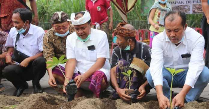 Puluhan Petani di Yangapi, Bangli Budidayakan Porang