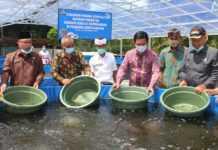 Diterjang Pandemi, Warga Tambahan Kelod Budidayakan Lele