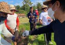 Ikut Penggropyokan, Giri Prasta Dorong Pemanfaatan Musuh Alami Tikus