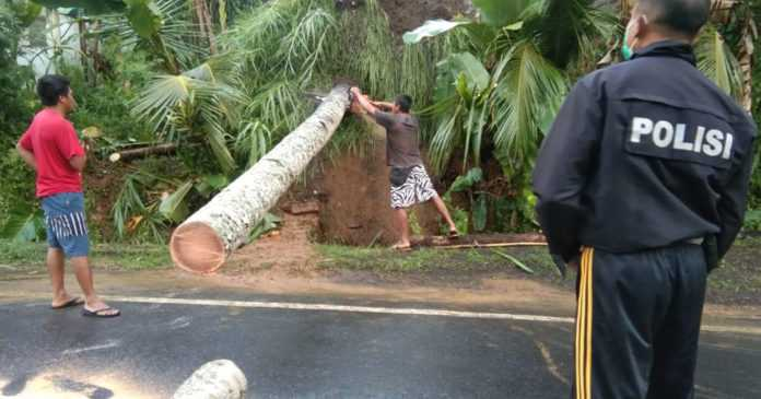 Pohon Kelapa Tumbang Timpa Garase Warga