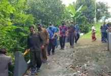 Di Buleleng, 150 hektar Sawah Terancam Gagal Panen