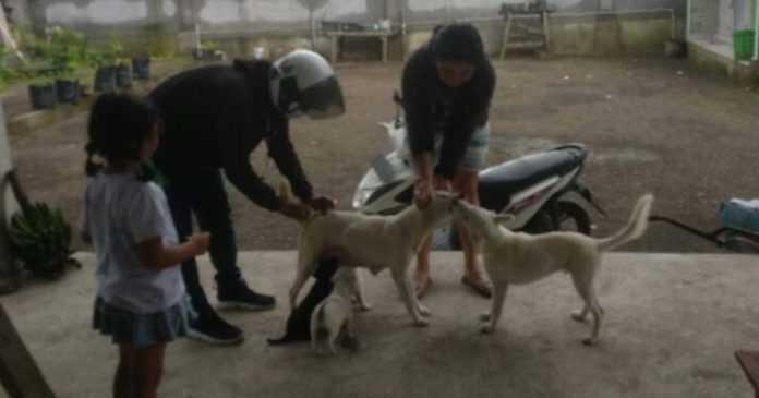 2021, Segini Target Vaksin Anjing di Denpasar
