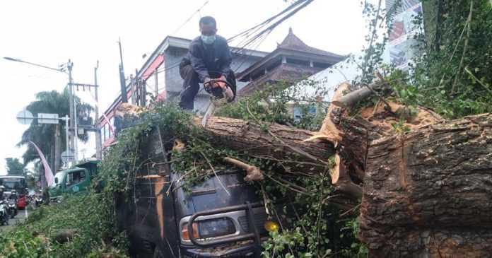 DLHK Denpasar Evakuasi Pohon Timpa Mobil