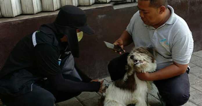Sasar Dua Desa, Distan Vaksin Ribuan Anjing