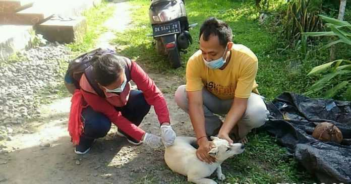 Dua Warga Pangkung Dedari Digigit Anjing Rabies